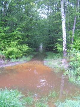 2junh_forest2