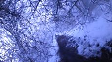 Branche-Neige