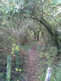 Arche d'arbres